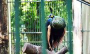 Những con vật sổng chuồng gây náo loạn ở Việt Nam