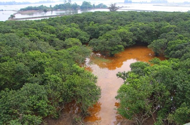 Rừng ngập mặn nguyên sinh quý hiếm ở Huế