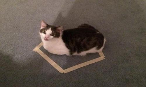 Tại sao mèo thích ngồi trong vòng tròn?
