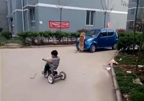tai-xe-chay-sai-lan-dua-nhau-thao-dai-phan-cach-de-tron-csgt-10