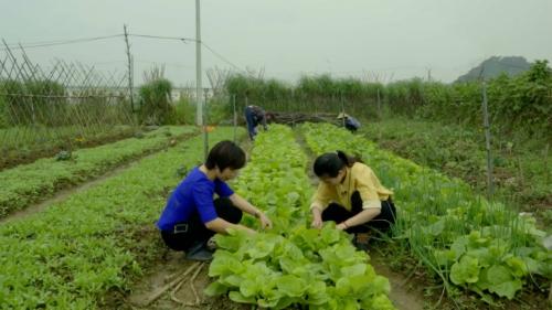 3 mô hình sản xuất theo hướng hữu cơ điển hình trong nông nghiệp