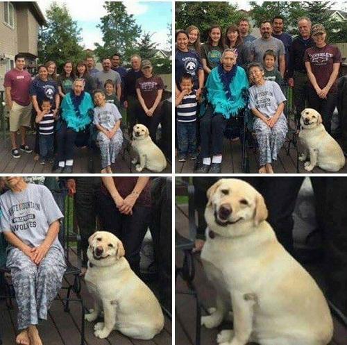 Nụ cười rạng rỡ của chú chó được chụp ảnh ké.