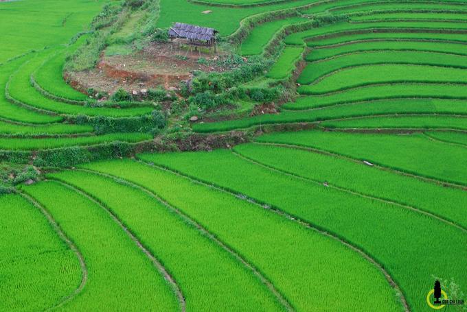 Thung lũng lúa xanh rì trong lõi rừng Yên Bái