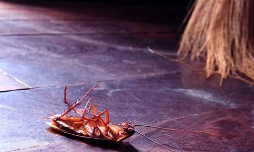 Tại sao con gián thường nằm ngửa khi chết?