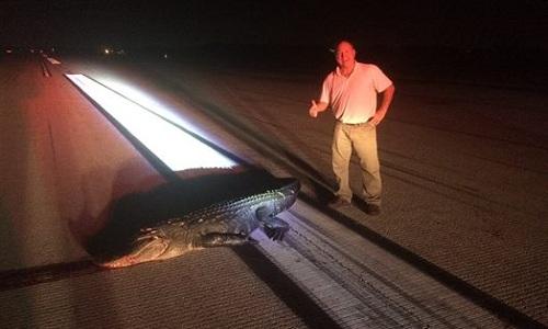 Phi công Rick Rose chụp ảnh bên xác con cá sấu. Ảnh: Facebook