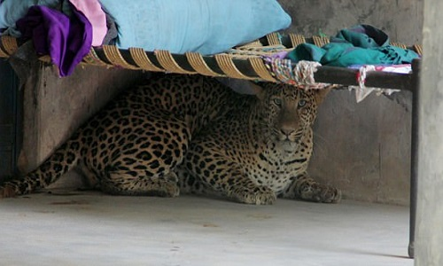 VNE-Leopard-2-3645-1497690913.jpg