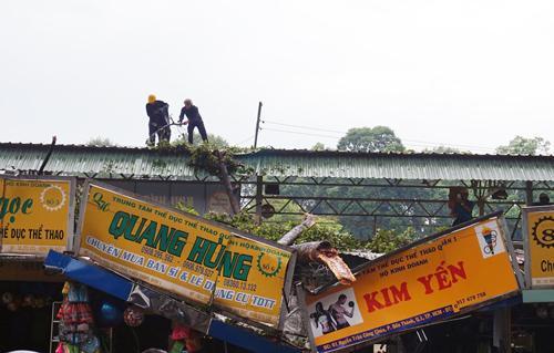 Cành cổ thụ đè sập 2 cửa hàng ở trung tâm Sài Gòn