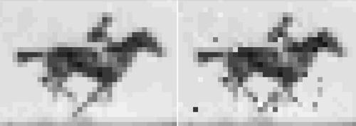 Lưu phim đen trắng vào ADN của vi khuẩn