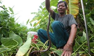Người đàn ông 27 năm theo nghề câu lươn ở Hà Nội