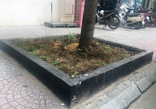 Bó vỉa cây xanh chiếm vỉa hè Sài Gòn được đề nghị tháo dỡ