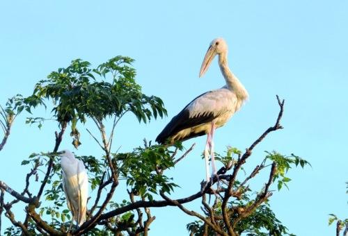 Hơn 45 tỷ đồng bảo tồn đảo cò ở Hải Dương - Ảnh minh hoạ 2