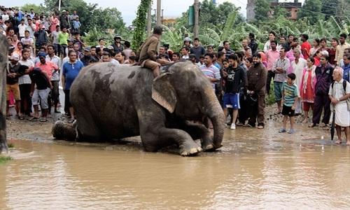 voi-giai-cuu-hang-tram-nguoi-mac-ket-trong-lu-o-nepal