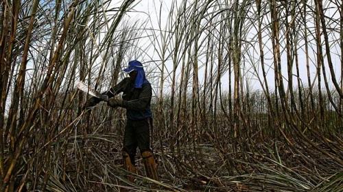 Người phụ nữ từ con nhà nông trở thành triệu phú Brazil - Ảnh minh hoạ 2