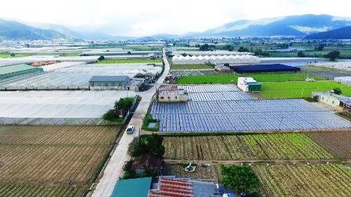 Vựa rau lớn nhất Lâm Đồng sau 5 năm tái cơ cấu nông nghiệp