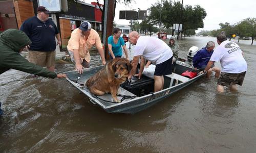 Những anh hùng lặng lẽ cứu người trong bão Harvey