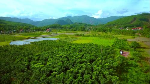 Chanh đào VietGap sai quả trên đất đồi Hoành Bồ