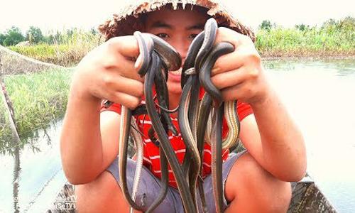 Hàng chục rắn bông súng sa bẫy sau cơn mưa Sài Gòn