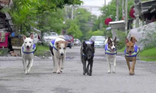 Biệt đội chó hoang tuần tra phố đêm ở Thái Lan