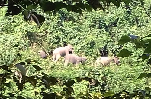 24 triệu USD thành lập khu bảo tồn voi ở Quảng Nam