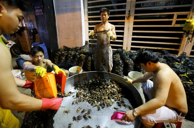 Chợ cua đồng hoạt động lúc nửa đêm trên vỉa hè Sài Gòn - Ảnh minh hoạ 10