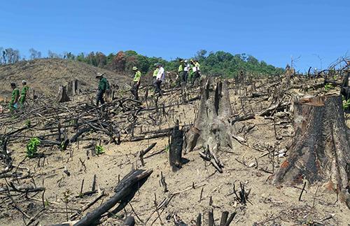 Cơ quan chức năng kiểm tra hiện trường vụ phá hơn 60ha rừng ở huyện miền núi An Lão, Bình Định. Ảnh: Thạch Thảo