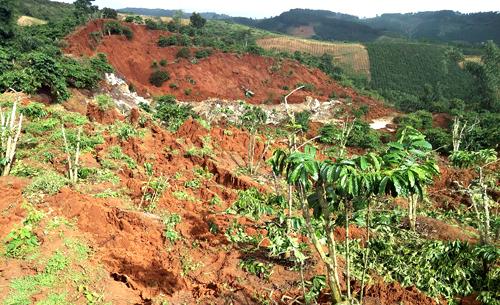 Cả vạt đồi trồng cà phê bỗng nhiên sụt lún chưa rõ nguyên nhân. Ảnh: Khánh Hương.