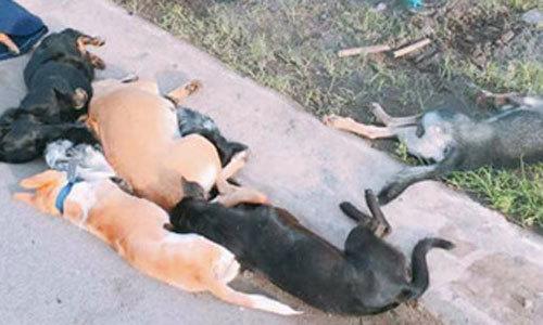 Đi trộm chó bị đâm tử vong