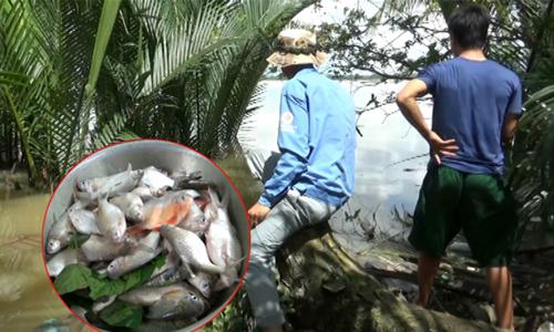Hai cao thủ câu 10 kg cá mè vinh trên sông Hậu