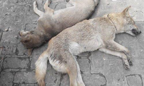 Giải cứu thiếu niên trộm chó bị dân treo cổ ở cột điện
