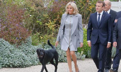 Tổng thống Pháp Emmanuel Macron, phu nhân Brigitte và Đệ nhất Khuyển Nemo. Ảnh: AFP.