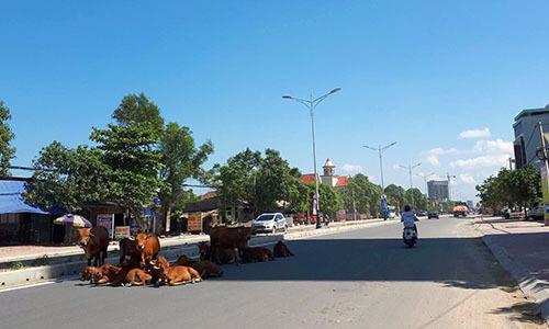 Chủ tịch huyện ở Hà Tĩnh đề xuất làm đường cho trâu bò đi qua quốc lộ