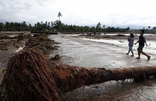 Cây cối đổ gãy sau khi bão Tembin quét qua đảo Palawan. Ảnh: AFP.