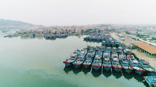 Bến cảngmua bán cá ở Hải Bình.