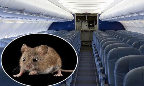 Chuột lọt vào máy bay Mỹ, 110 hành khách phải sơ tán