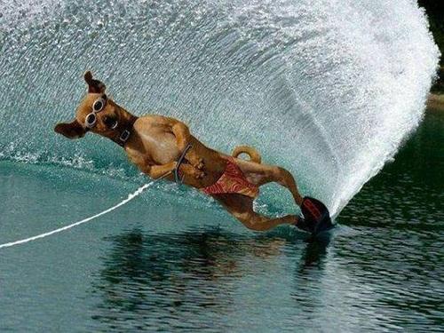 Cún cưng lướt sóng.