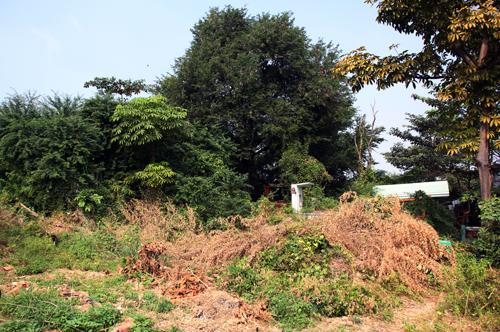 Bãi đất hoang với cây cối um tùm cùng mồ mả. Ảnh: Duy Trần
