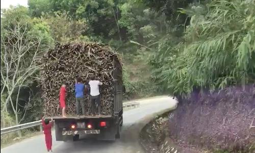 Nhóm trẻ em đánh đu xe tải đang chạy để rút trộm mía