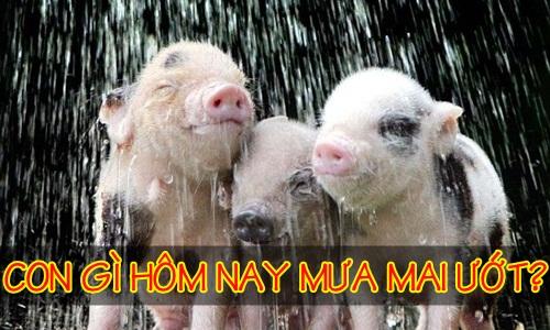 Con gì hôm nay mưa mai ướt?