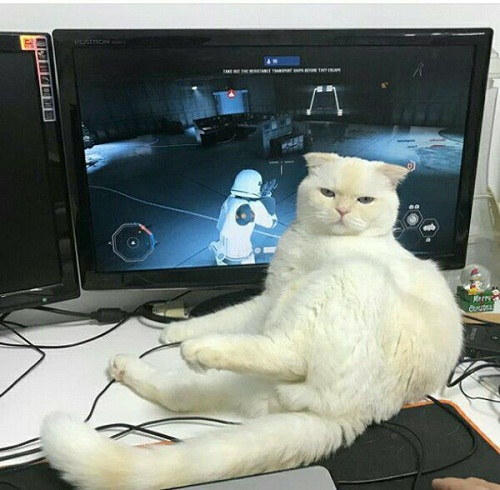 Tư thế ngồi bá đạo của mèo.