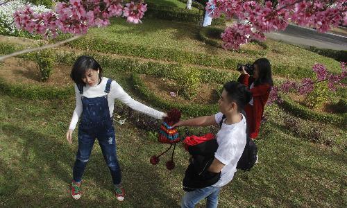 Một số bạn trẻ phải vào tận khuôn viên làng SOS Đà Lạt để chụp ảnh với cây hoa đào ở đây. Ảnh: Lê Trần