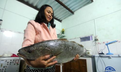 Ngư dân thả lưới bắt được cá hơn 6 kg nghi sủ vàng quý hiếm