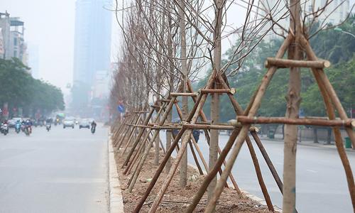 """Hà Nội """"nhiệt đới hoá"""" nhiều giống cây mới để trồng trên phố"""