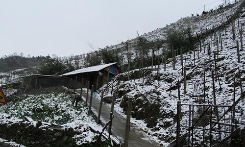 Tuyết rơi diện rộng ở Sa Pa