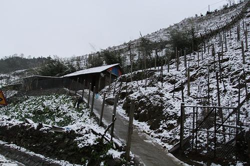 Khu vực thác Bạc và đèo Ô Quý Hồ tuyết đã phủ trắng. Ảnh: Báo Lào Cai