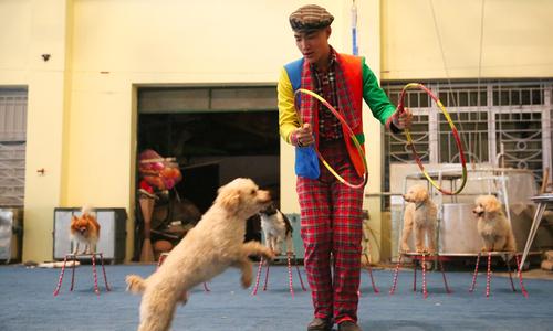 Phía sau ánh đèn sân khấu của nghề huấn luyện chó làm xiếc