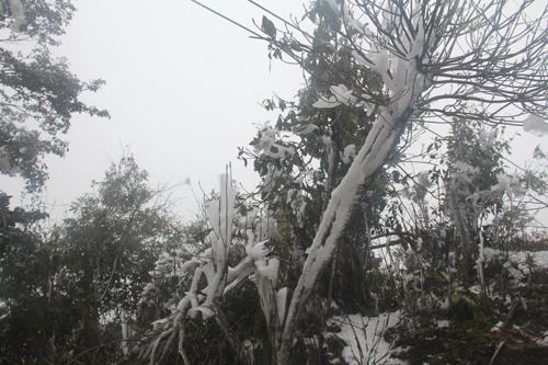 Băng tuyết xuất hiện trên đỉnh Trống Páo Sang (Mù Căng Chải, Yên Bái). Ảnh: Giàng A Lù.