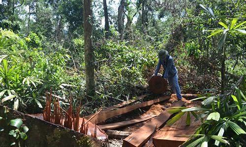 70 m3 gỗ bị bỏ lại trong rừng phòng hộ ở Quảng Bình