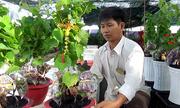 Gần 10.000 cây nho kiểng bán Tết của nông dân Ninh Thuận
