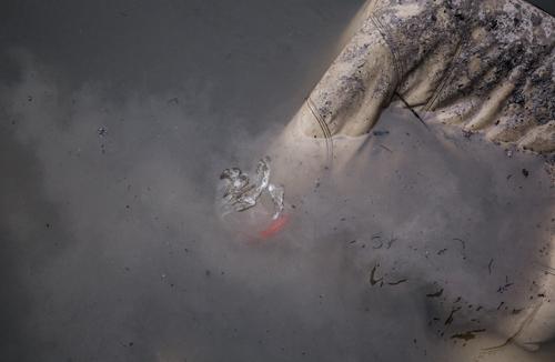Cá chép bị thả xuống dòng sông Nhuệ ô nhiễm. Ảnh: Mạnh Cường