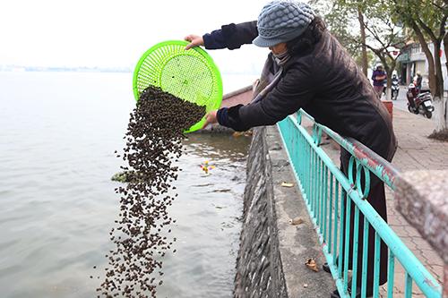 Nhiều rổ ốc cũng bị phóng sinh thẳng xuống hồ. Ảnh: Phạm Dự.